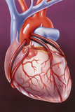 Heart Bypass Grafts Posters by John Bavosi