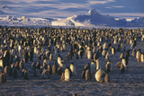 Emperor Penguin Rookery Posters by Doug Allan
