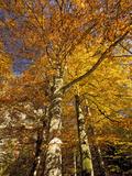 Autumn Colour Photo by Bob Gibbons