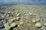 Geodes on Limestone Plateau Photographic Print by Diccon Alexander