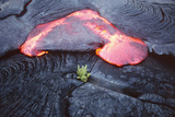 Lava Flow And Young Plant, Hawaii Photographic Print by Dr. Juerg Alean
