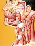 Artwork of Mouth-neck: Tumour, Cyst, Duct Calculus Photographic Print by John Bavosi