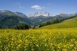 Alpine Meadow, Switzerland Fotografisk tryk af Dr. Juerg Alean