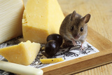 Mouse with Cheese Photographic Print by David Aubrey