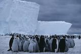 Emperor Penguin Rookery Prints by Doug Allan