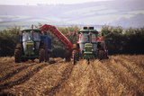 Potato Harvest Photographic Print by David Aubrey