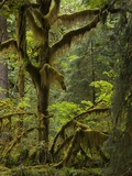 Temperate Rainforest Prints by Bob Gibbons