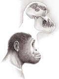 Paranthropus Aethiopicus Skull And Head Photographic Print by Mauricio Anton