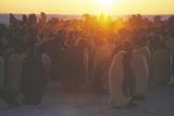 Emperor Penguins Huddling Photo by Doug Allan