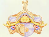 Artwork of Cervical Vertebra From Human Spine Posters by John Bavosi