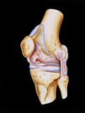Artwork of Bones & Ligaments In Human Knee Joint Print by John Bavosi