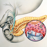 Artwork of the Pancreas Showing Insulin Production Photographic Print by John Bavosi