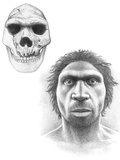 Homo Heidelbergensis Skull And Face Photographic Print by Mauricio Anton