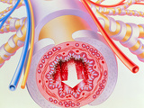 Artwork of Bronchodilator Drug In Bronchiole Posters by John Bavosi