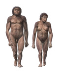 Male And Female Homo Habilis Photographic Print by Mauricio Anton