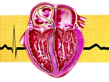 Artwork of Sectioned Heart with Healthy ECG Trace Photographic Print by John Bavosi