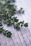 Sprigs of Thyme Photographic Print by Maxine Adcock