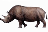 Woolly Rhinoceros, Artwork Photographic Print by Mauricio Anton