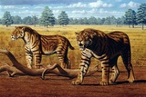 Sabre-toothed Cats, Artwork Photographic Print by Mauricio Anton