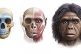 Homo Floresiensis Prints by Mauricio Anton