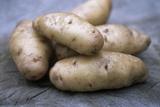 Potatoes (Solanum Tuberosum 'Anya') Photographic Print by Maxine Adcock