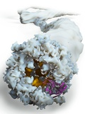 Ebola Virus, Molecular Model Posters by Ramon Andrade