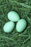 Chicken Eggs Print by David Aubrey
