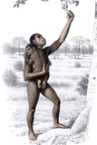 Female Homo Habilis Photographic Print by Mauricio Anton
