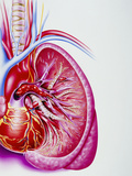 Artwork Showing a Pulmonary Embolism Photographic Print by John Bavosi