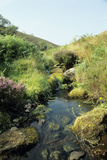Moorland Stream Photographic Print by David Aubrey