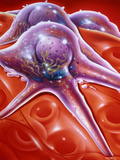 Illustration of Melanoma Cells on a Capillary Wall Posters by John Bavosi
