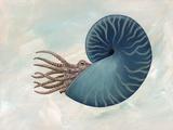 Sphenodiscus Ammonite, Artwork Photographic Print by Richard Bizley