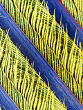 False-colour SEM of a Magpie's Feather Prints by Dr. Jeremy Burgess