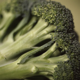 Broccoli Premium Photographic Print by  Cristina