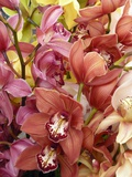 Mixed Orchids Photographic Print by Tony Craddock