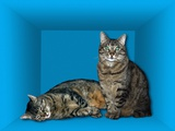 Schrodinger's Cat, Artwork Photographic Print by Victor De Schwanberg