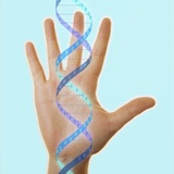 Hand And DNA Molecule Photographic Print by  Cristina