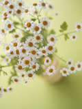 Feverfew Flowers Photographic Print by Erika Craddock