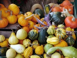 Display of Squashes And Pumpkins Photographic Print by Tony Craddock