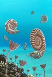 Ammonites In a Jurassic Sea Photographic Print by Richard Bizley