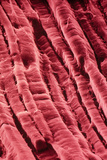 False-col SEM of Surface of Cooked Roast Beef Photo by Dr. Jeremy Burgess