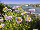 Daisy Flowers Premium Photographic Print by Tony Craddock