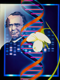 Computer Artwork of the Botanist Gregor Mendel Posters by Laguna Design
