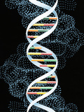 DNA Molecule Photographic Print by John Bavosi