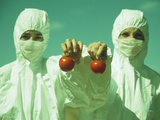 Scientists Holding GM Tomatoes Photographic Print by  Cristina