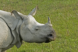 Indian Rhinoceros Photographic Print by Tony Camacho