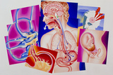 Artwork of Vomiting Reflex & Causes of Nausea Prints by John Bavosi