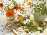 Pflanzen in der Medizin Poster von Erika Craddock