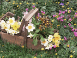 Erika Craddock - Mixed Spring Flowers - Fotografik Baskı