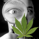 Cannabis Research Photographic Print by Victor De Schwanberg